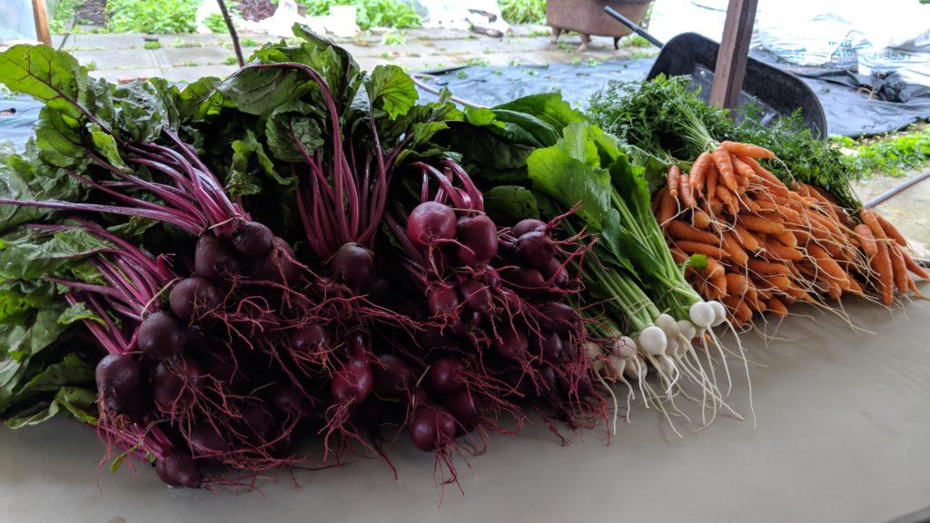 root vegetables season two