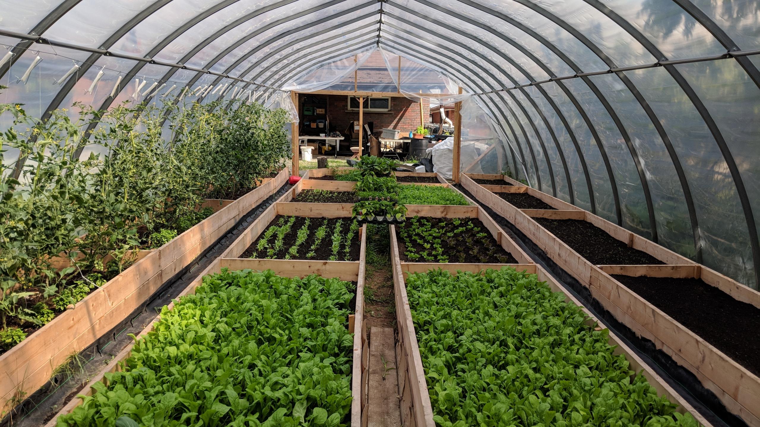 zawadi Farm Greenhouse